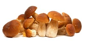 White porcini. Wild Foraged Mushroom selection isolated on background, with shadow. Boletus Edulis mushrooms Stock Photos
