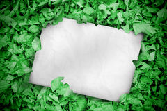White poster buried into green leaves Stock Photography