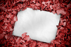 White poster buried into red leaves Stock Image