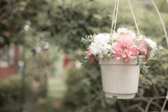 White pot of flower hanging in the garden Stock Images