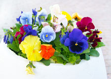 White Pot with Viola Pansy Flowers Stock Photo