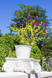 White pot with violet flowers. On the street Royalty Free Stock Photo