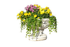 The white pot with yellow, pink and purple flowers Stock Photography