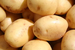 The white potato Stock Photography
