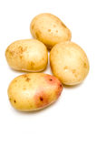 White potatoes. Closeup of four white potatoes isolated on studio background Royalty Free Stock Images