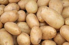 White potatoes Stock Photos