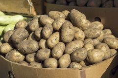 White potatoes lie on the counter of the vegetable market for sale. stock photos