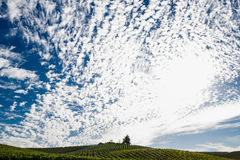 White puffy clouds in a blue sky over a Napa Valley vineyard Royalty Free Stock Images
