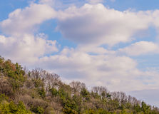 White puffy clouds over a wooded area Royalty Free Stock Images