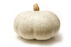 White pumpkin. Large white pumpkin isolated on studio background Royalty Free Stock Images
