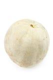 White pumpkin Stock Image