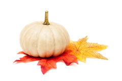 White Pumpkin with Autumn Leaves Stock Photography