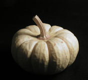 White Pumpkin on Black Royalty Free Stock Photo