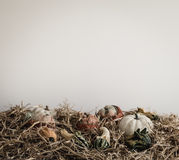 White Pumpkin on Brown Hay Royalty Free Stock Images