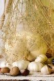 White pumpkin, garlic and plants Stock Photo