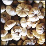 White pumpkin gourds Stock Photos