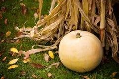White Pumpkin Stock Photography