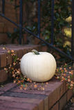 White pumpkin and orange flowers Royalty Free Stock Photography