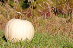 White Pumpkin Outside Stock Photo