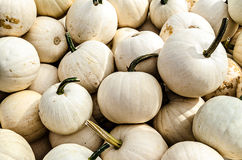 White Pumpkin Pile Stock Image