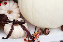 White Pumpkin with Ribbon Royalty Free Stock Image