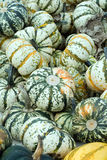 White Pumpkin Squash Stock Photo