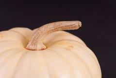 White Pumpkin Stem Stock Photo