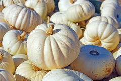 White Pumpkins Royalty Free Stock Photos