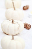 White Pumpkins and Acorns Royalty Free Stock Images