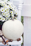 White Pumpkins and Chrysanthemums Royalty Free Stock Photos
