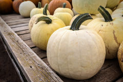 White Pumpkins Royalty Free Stock Image