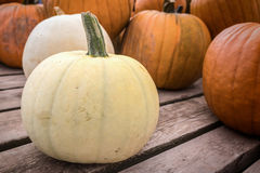 White Pumpkins Royalty Free Stock Photography
