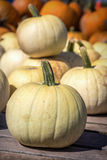 White Pumpkins Royalty Free Stock Photos