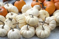 White Pumpkins Stock Images
