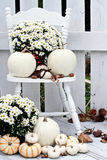 White Pumpkins and Mums. Beautiful white pumpkins and mums sitting on an old vintage chair on a porch in the autumn royalty free stock image