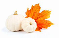 White pumpkins with red leaf Stock Images