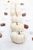 White Pumpkins in a Row Stock Image