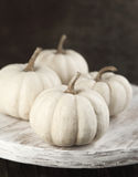White Pumpkins on Wooden Board Stock Images