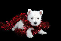 White puppy with  garland Royalty Free Stock Images