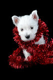 White puppy with  garland Stock Images