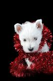 White puppy with  garland Stock Photo