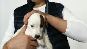 White puppy in mans arms. stock footage