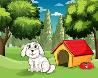 A white puppy outside his doghouse Stock Image