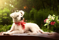 White puppy photo in summer garden. With vase and flowers Royalty Free Stock Photos