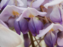 White and purple bouquet of orchid in the spring stock photo