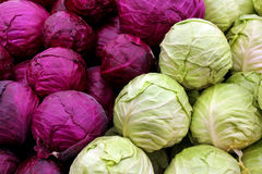 White and purple cabbage. Agricultural background, a white and purple cabbage stock photo