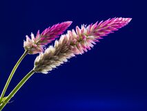 White and Purple Clustered Elongated Plant Stock Image