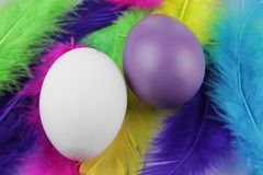 Colorful eggs with soft feathers. White and purple egg in soft feathers. Bright and happy background in macro view royalty free stock photography