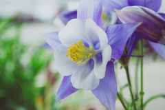 White and Purple Flowers Royalty Free Stock Photos