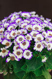 White and  purple flowers in a bouquet Stock Photos